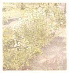 o. T., Farbstift auf Papier, 14,5 x 13,8 cm, 2012