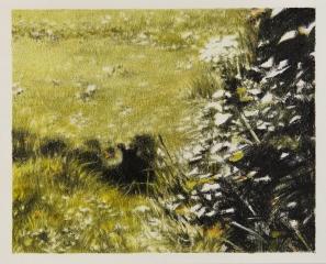 DIE KATZE I, Farbstift und Kohle auf Papier, 21 x 26 cm, 2017