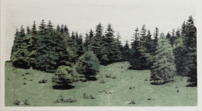 SCHWARZWALD, Farbstift auf Papier, 25 x 45 cm, 2017